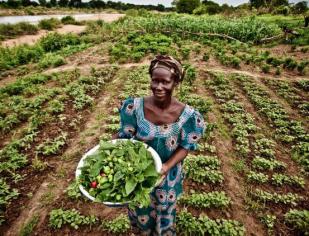 Papa: investir no desenvolvimento rural para combater a fome no mundo